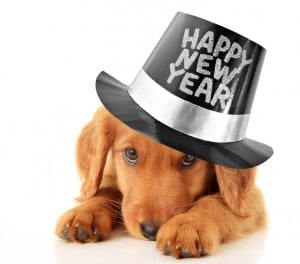 Happy New Year puppy