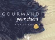 Chien Gourmet : Petits Coeurs au Beurre de Cacahuètes