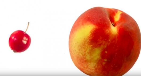 ancient peach vs modern peach - lebootcamp