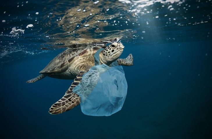 tortue plastique